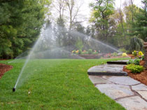 Water Efficient Landscape